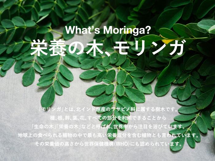 moringaとは